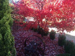 Portland Gate gardens